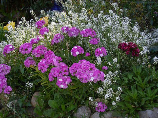 IMGP0947-flowers